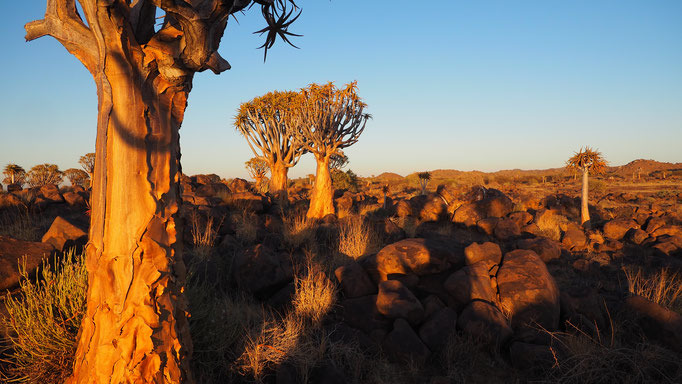 Namibia, Köcherbaumwald bei Keetmanshoop
