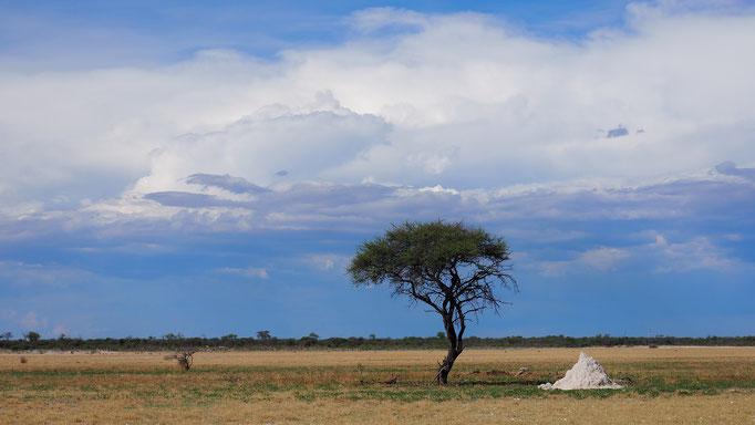 Namibia, Etosha