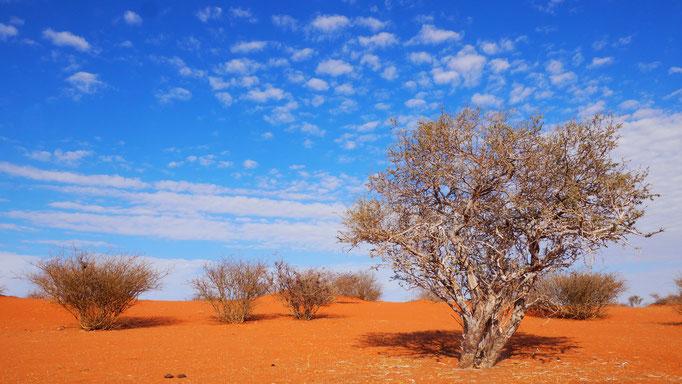 Namibia, in der Kalahari
