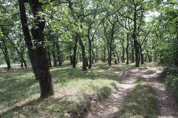 Sentier en sous bois