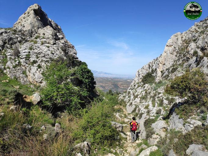 Hacia el cordel del Castellar. Vía Pecuaria. Zona de Hoya Alta.