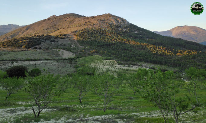 Silleta, cerro de Enmedio, Monteagudo