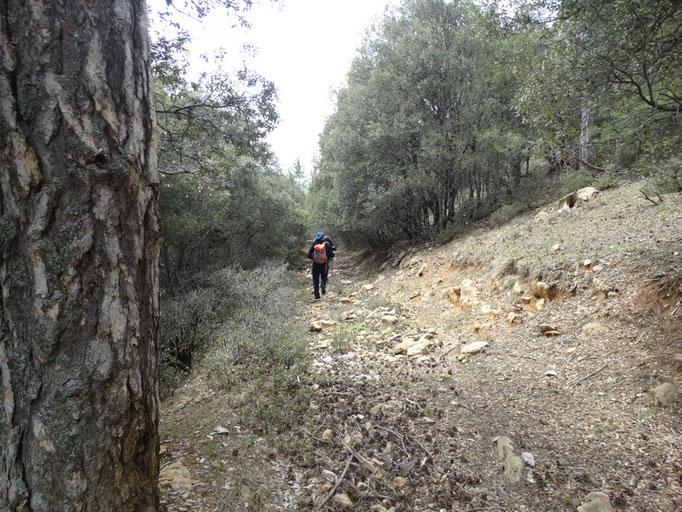 Camino o jorro que nos baja a Linarejos