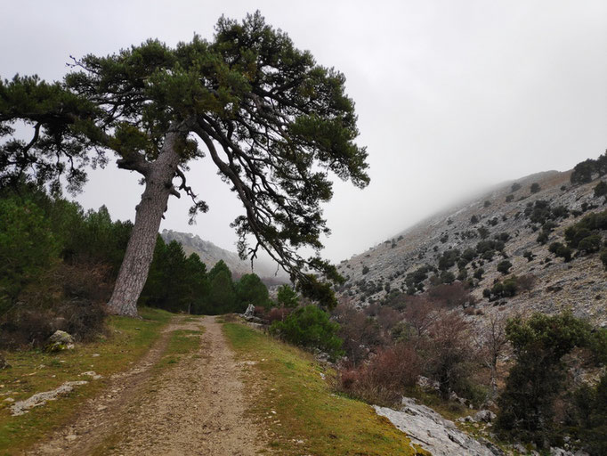 Camino del Poyo de las Palomas
