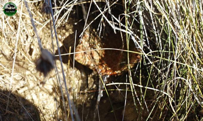 Fuente del bonal de los Villares