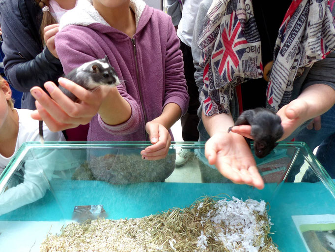 De jeunes visiteurs découvrent Giuliana & Sakura