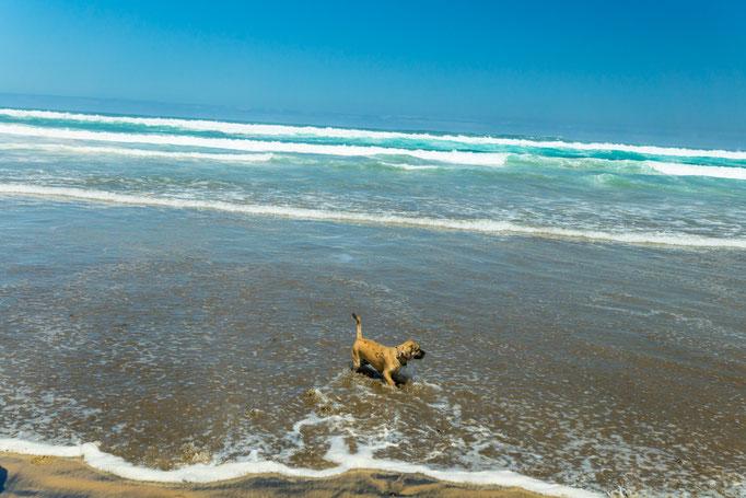 Große Freude an der Playa de Cofete bei unserer Wanderung