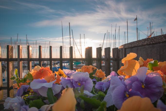 der Yacht- und Fischreihafen in Möltenört an der Kieler Förde