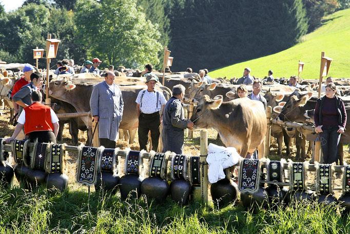 foto-aldente.net - Rehetobel - Viehschau - Fotografie - Tierfotografie