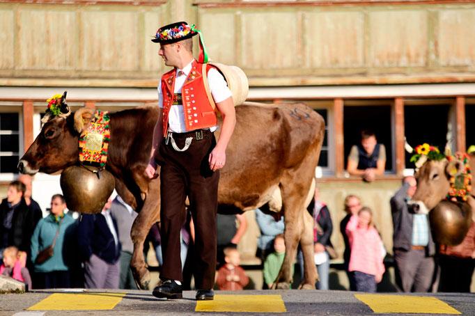 foto-aldente.net - Urnäsch - Viehschau - Fotografie - Tierfotografie