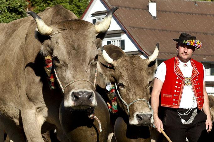 foto-aldente.net - Alt St. Johann - Viehschau - Fotografie - Tierfotografie