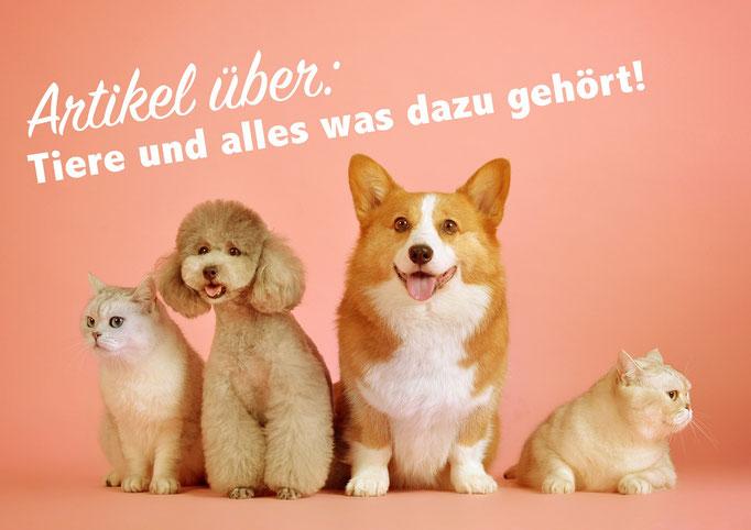 artikel über Tiere kaufen, Haustiere, deutsche Artikel, Content kaufen