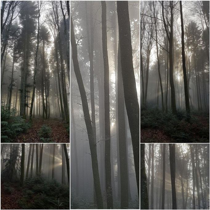 Frieswil mystische Stimmung Wintersonne scheint durch die Bäume