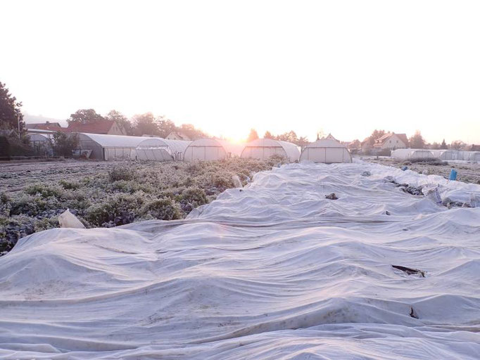 Ein schöner Sonnenaufgang über der Gärtnerei