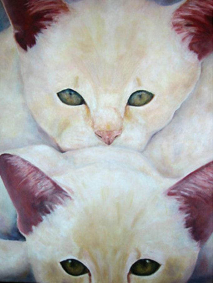 Cats   Öl auf Leinwand   100 x 100 cm
