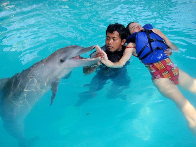 Dolphin in Lovina