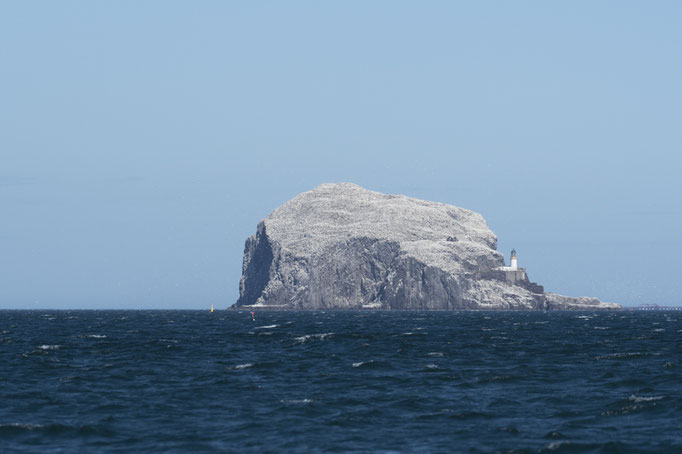 Îlot de Bass Rock - Ecosse - 08/07/2016