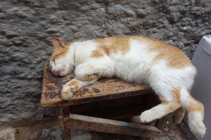 Katze die schläft