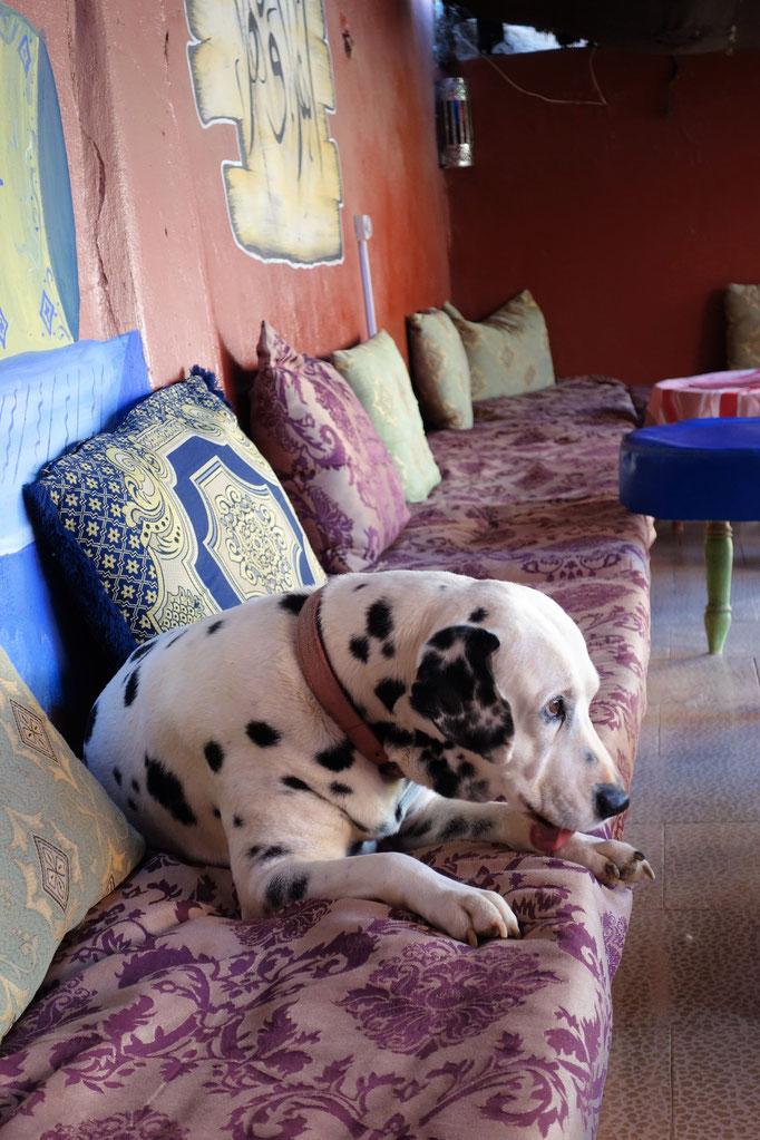 Der Hund der Besitzer