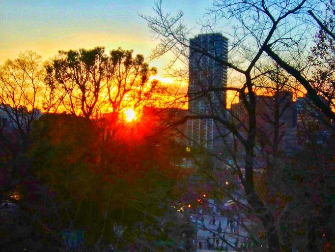 不忍池の夕陽