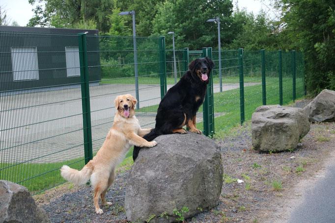 Arya & Dunja