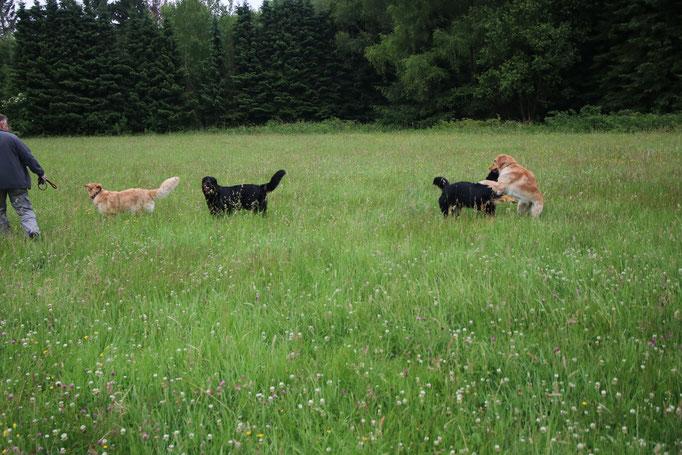 Arya, Dunja, Nami & Dyani
