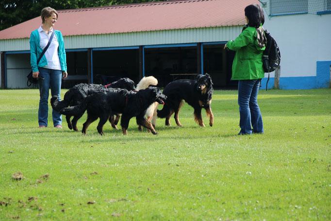 Aika (bl), Arya (bl), Asahi (sm), Amir (sm) & Aiko (sm)