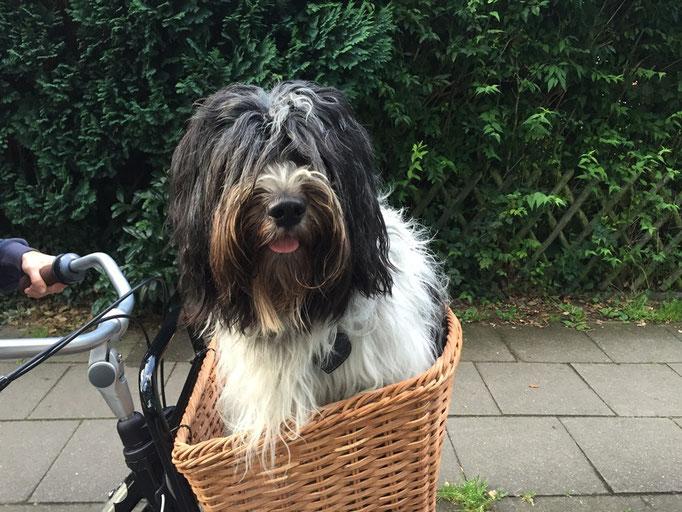 Claudia hat ein neues Fahrrad mit einem gemütlichen Korb.