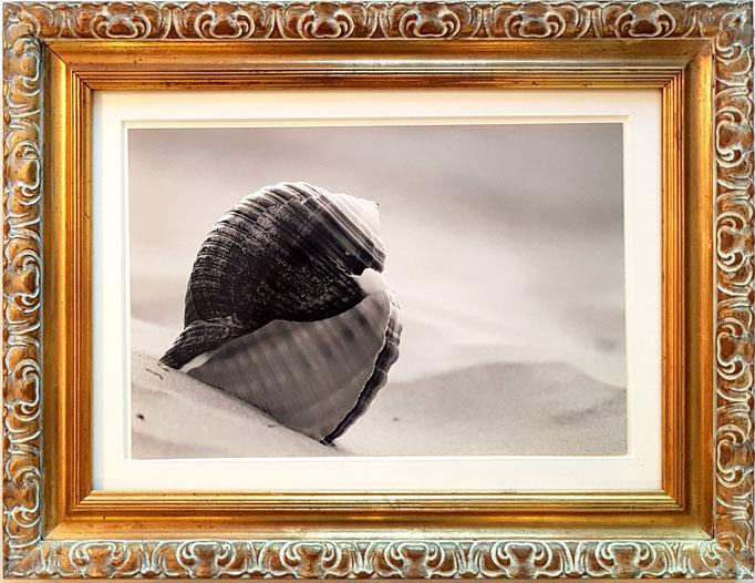 Fotokunst in der Galerie Picorest