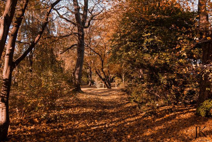 Herbstspaziergang auf dem Alten Friedhof in Flensburg