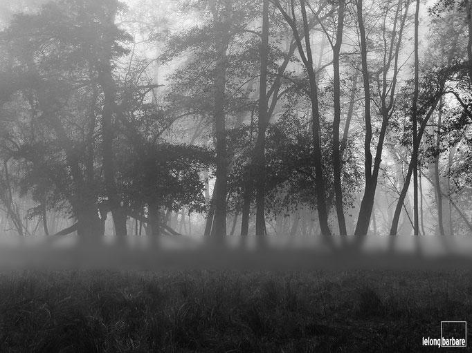 le long barbare - llbpicscopyright - light - un matin d automne - alsace - 20031105