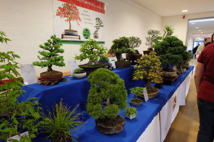 Faszinierende Bäume