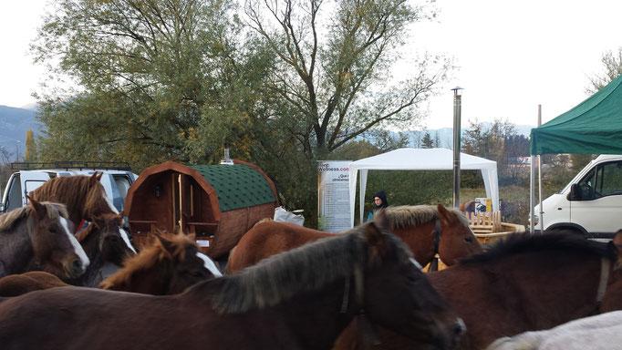 El paso de los caballos era un atractivo más de esta feria
