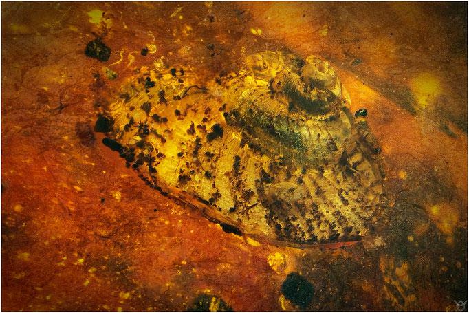 617. Snail, Schneckenhaus, Burmese Amber