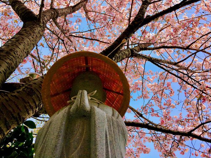 禅衆院の桜の下で、笑顔が素敵な禅衆院の見守り地蔵さん