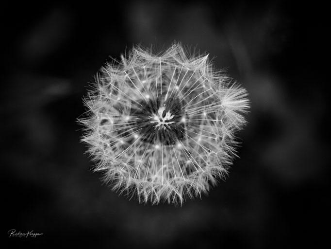 Flowers_5