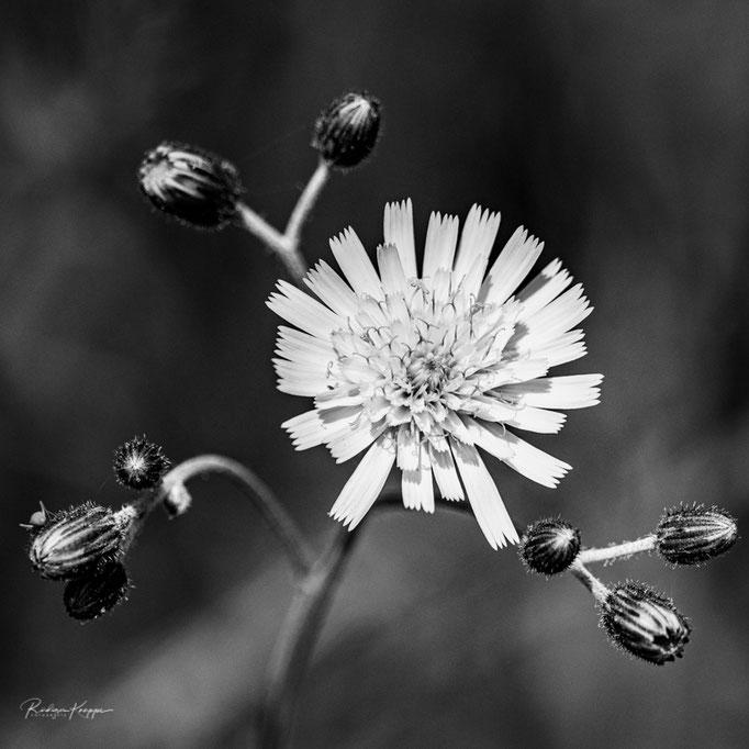 Flowers_7