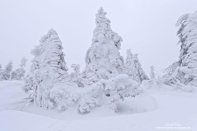 Unglaublich, welchen Bedingungen diese Bäume ausgesetzt sind. Ein dicker Eispanzer lässt nur noch die Form der Bäume erkennen.