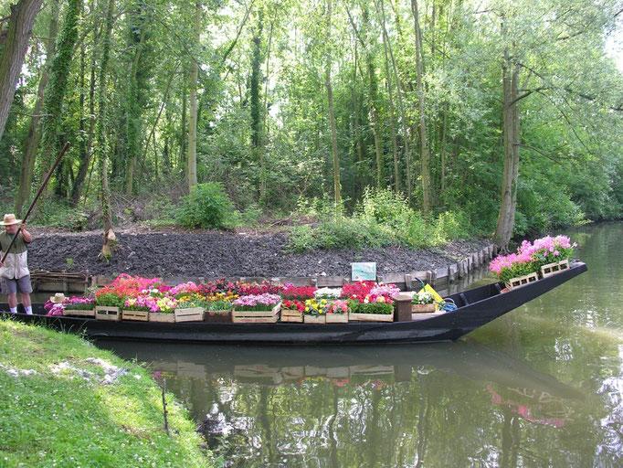 Les hortillonnages club nautique de rivery hortillonnages d 39 amiens location cano kayak - Les hortillonnages d amiens ...