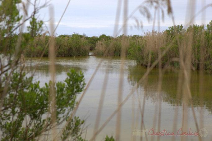 """Boucle de randonnée pédestre """"Plaines du Teich et Domaine de Fleury"""""""