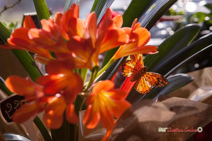 12 Fleurs et Passion, Véronique CONSTANT, Avenue de la Confluence, 47160 DAMAZAN Reproduction interdite - Tous droits réservés © Christian Coulais