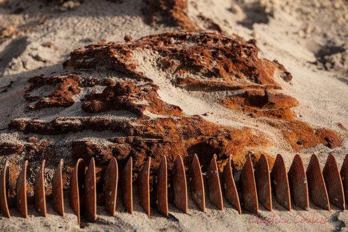 """""""Alios ostréicole"""". Biscarrosse océan, plage du Vivier, Landes. 21 février 2016"""