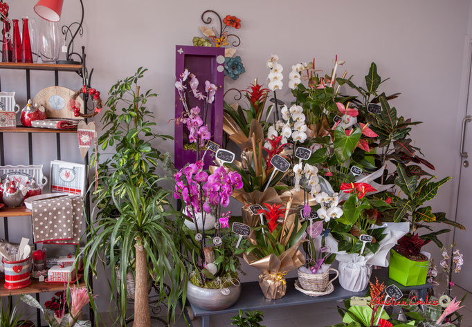 26 Fleurs et Passion, Véronique CONSTANT, Avenue de la Confluence, 47160 DAMAZAN