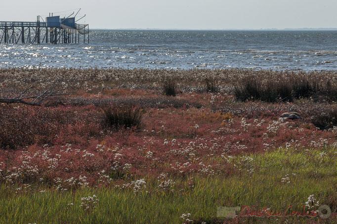 Carrelets et pontons, Flore des berges de l'estuaire de la Gironde, Talmont-sur-Gironde