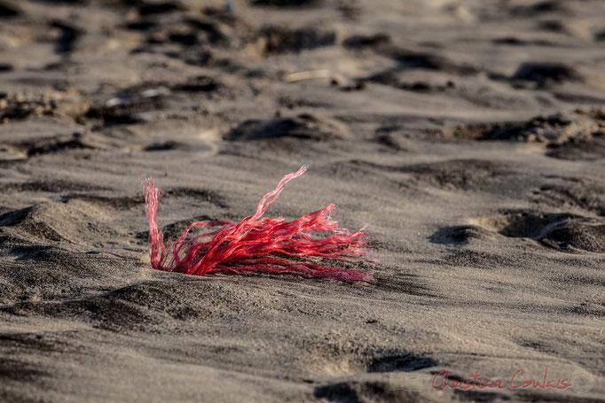"""""""Fils rouges"""". Biscarrosse océan, plage du Vivier, Landes. 21 février 2016"""