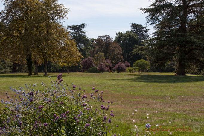 Le parc historique, Domaine de Chaumont-sur-Loire, Loir-et-Cher, Région Centre-Val-de-Loire. Mercredi 26 août 2015. Photographie © Christian Coulais