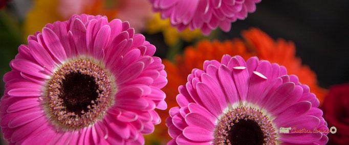 18 Fleurs et Passion, Véronique CONSTANT, Avenue de la Confluence, 47160 DAMAZAN Reproduction interdite - Tous droits réservés © Christian Coulais