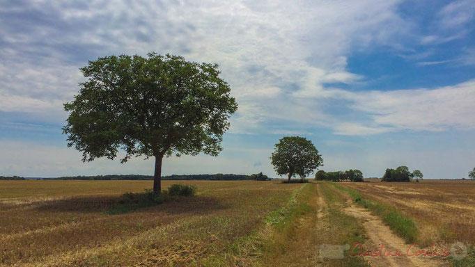 Plaine céréalière du Haut-Poitou, après la moisson d'un champ de blé à Avanton, Vienne