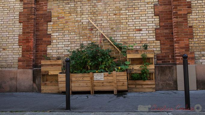 """""""Ceci est un champ de tomates...peut-être."""" Passage Josset, Paris 11ème arrondissement"""