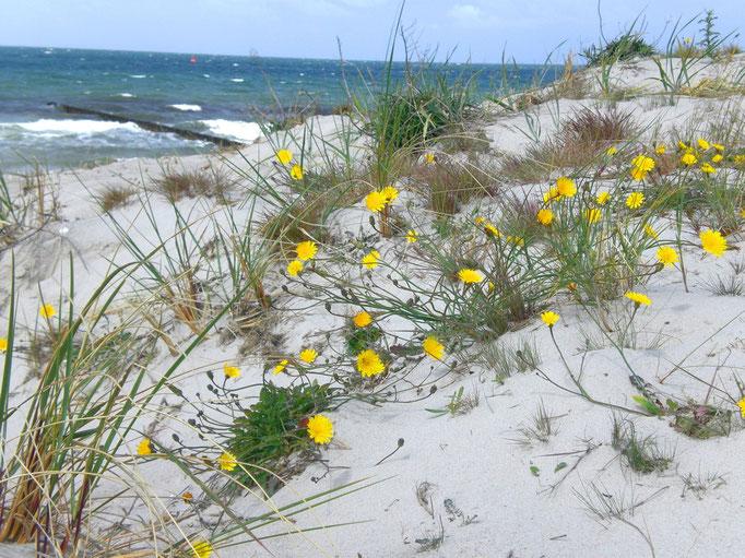 strand vor neuendorf, blumen, sand